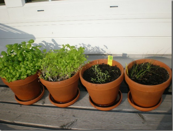 Left to right: Basil, parsely, sage, chives