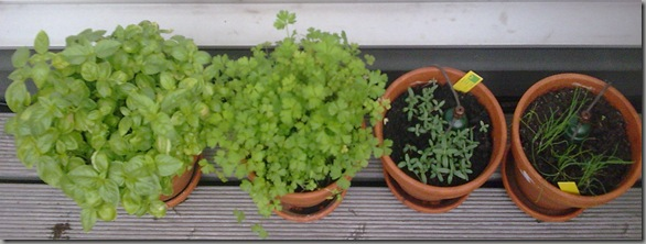 Left to right: Basil, parsley, sage, chives