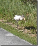 Storks roaming the trail, this one didn't seem overly impressed by our presence