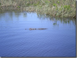 Gators doing what they do best, looking distinctly menacing