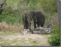 Elephants sighted while on safari!